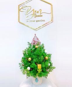 Hoa Giáng sinh