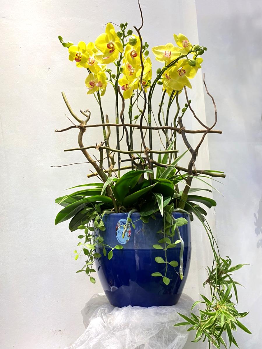 orchid-hoa-lan-ho-diep-orchid-yen-garden-qua-tet-yeu-thuong-chuc-mung-0982299988